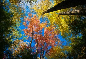A Stunning View of Vermont's Fall Foliage